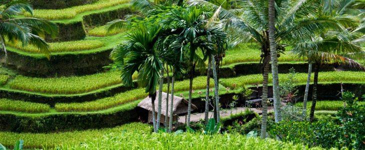 Ladang Sawah Terindah di Indonesia