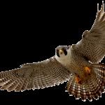 Falcon-Hewan-Paling tercepat